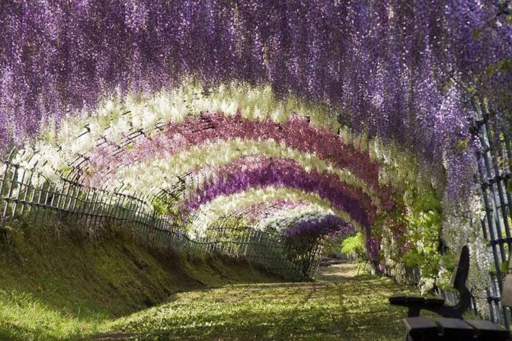 10. Wisteria Flower Tunnel - Kawachi Fuji Garden Japan