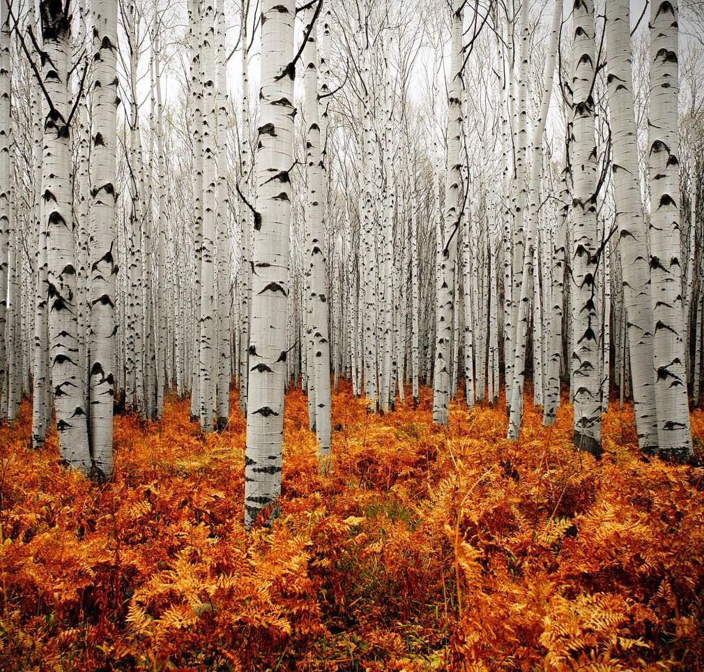 3 Silver Forest Aspen Colorado Usa