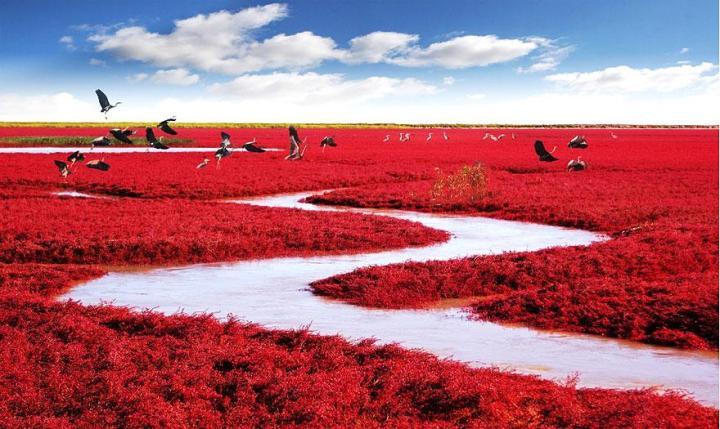 8b. Red Beach - Panjin, China